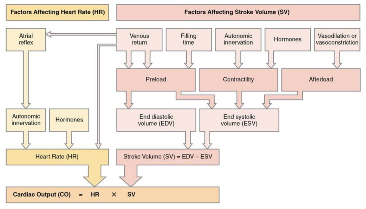 what can affect cardiac output