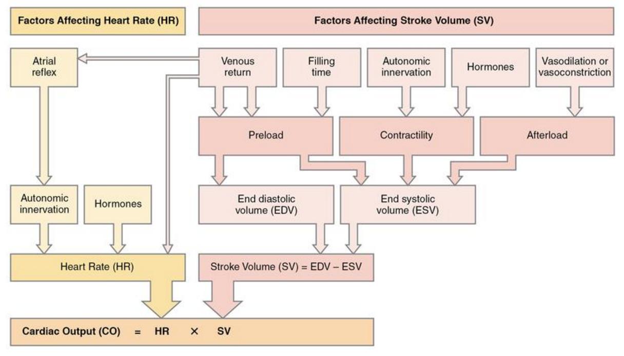 how can decreased cardiac output cause