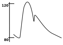 Curve of the arterial pressure during one cardiac cycle (sourced from Wikipedia).