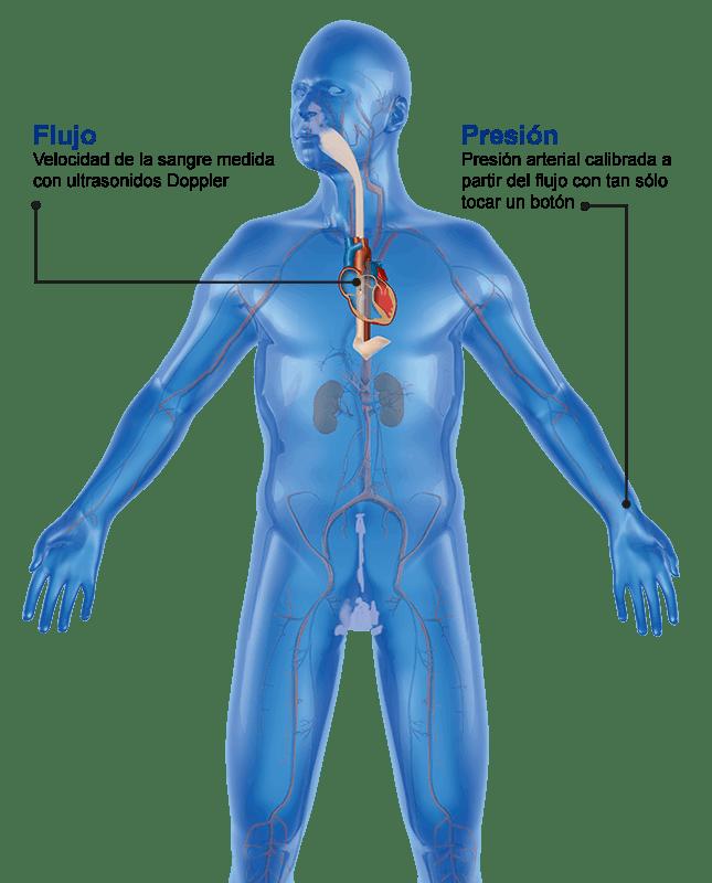 Flujo Sanguíneo junto con Presión Arterial